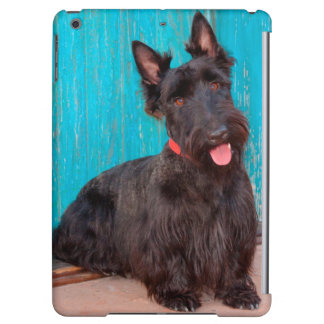 Scottish Terrier sitting by colorful doorway iPad Air Cover