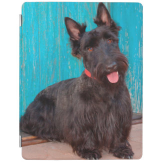 Scottish Terrier sitting by colorful doorway iPad Cover