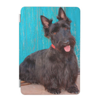 Scottish Terrier sitting by colorful doorway iPad Mini Cover