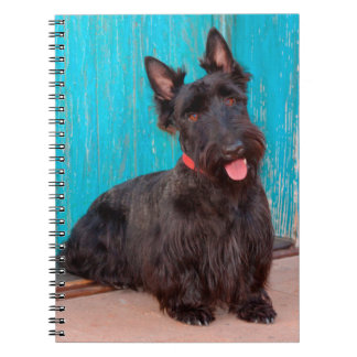 Scottish Terrier sitting by colorful doorway Notebooks