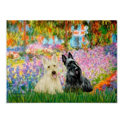 Scottish Terrier (two BW) - Garden Poster