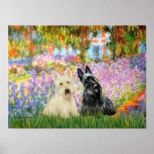 Scottish Terrier (two BW) - Garden Poster