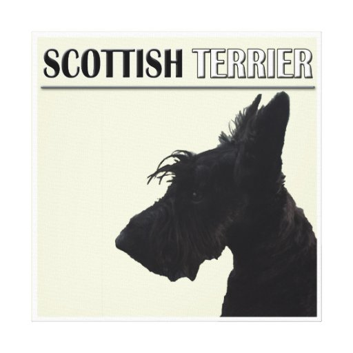 Scottish Terrier Wall Decor Stretched Canvas Prints