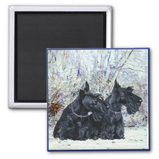 Scottish Terriers in Wintertime Square Magnet