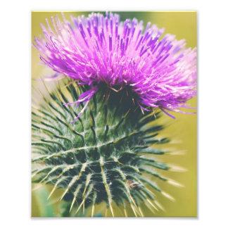 Scottish Thistle Art Photo