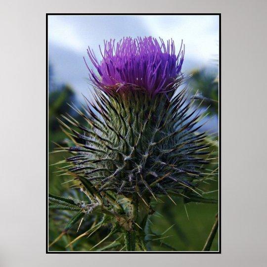 Scottish Thistle Fine Art Photography Poster