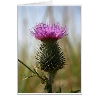 Scottish Thistle Notecard