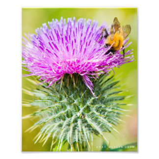 Scottish Thistle Photo Art