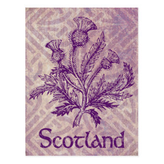 Scottish Thistle Purple Celtic Knot Postcard