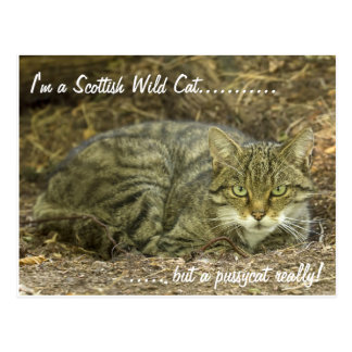 Scottish Wild Cat Postcards