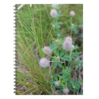 Scottish wildflower notebook