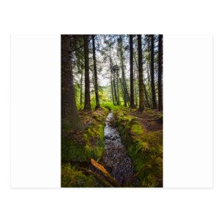 Scottish Woodland Stream Postcard