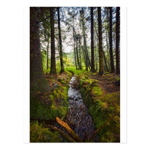 Scottish Woodland Stream Post Card
