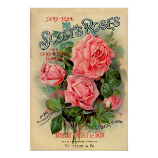Scotts Roses Advertisement Posters