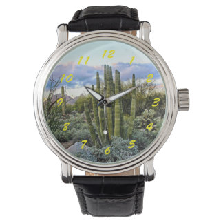 Scottsdale Succulent Sunset Watch