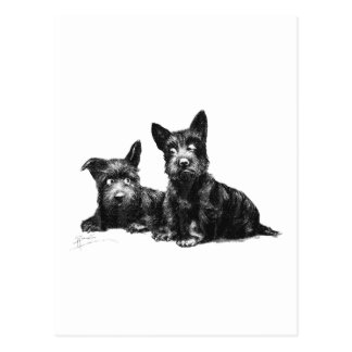 SCOTTY DOGS CHECK AND RECHECK POSTCARD