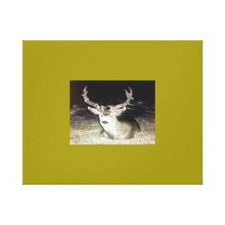 Scraggley Canvas Print