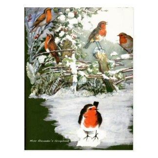Scrapbook Robins Postcard