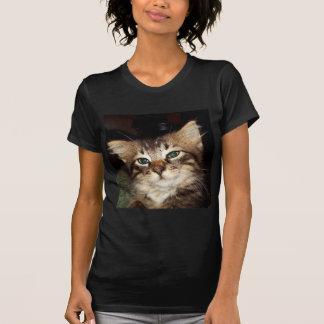 Scrapper Kitten Tee Shirts