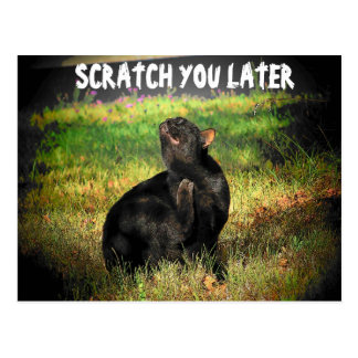 Scratch you later postcards