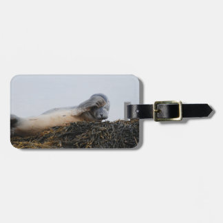 Scratching Seal Luggage Tag