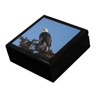 Screaming Eagle Gift Box