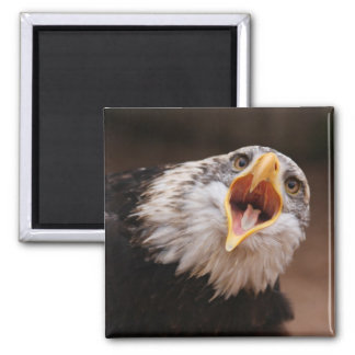 Screaming Eagle Magnet