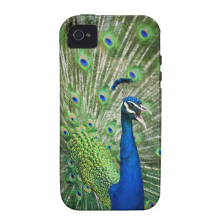 Screaming peacock vibe iPhone 4 cover