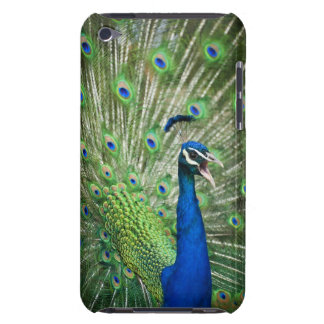 Screaming peacock iPod touch case