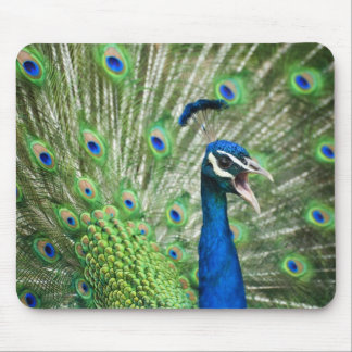Screaming peacock mouse pad