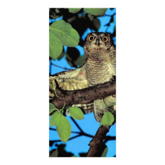 Screech owl customized rack card
