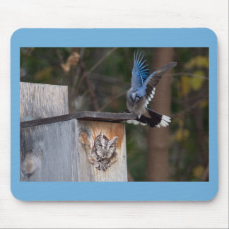 Screech-Owl Harassed by Blue Jay Mousepad