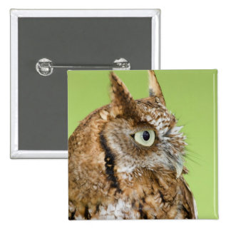 Screech owl portrait 15 cm square badge