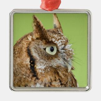 Screech owl portrait christmas ornament