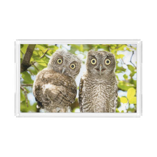 Screech Owls Chicks 2 Acrylic Tray