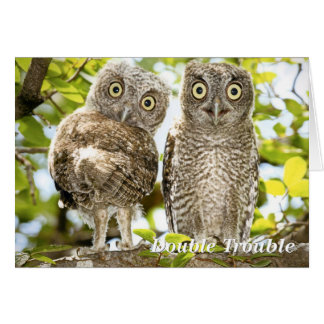 Screech Owls Chicks Card