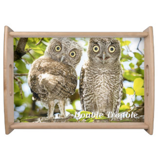 Screech Owls Chicks Serving Tray