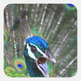 Screeching Peacock Closeup Square Sticker