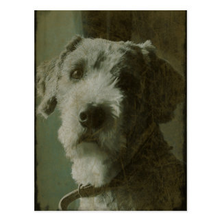 Scruffy Dog Antique Photo Postcard