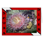 Scuba Diver Anemone Card