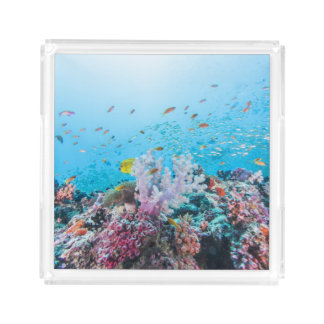 Scuba Diving With Colorful Reef And Coral
