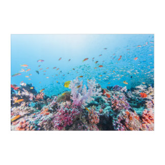 Scuba Diving With Colorful Reef And Coral Acrylic Wall Art