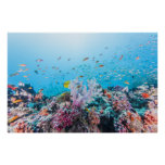 Scuba Diving With Colourful Reef And Coral Poster
