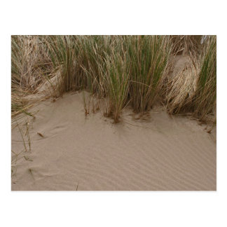 Sculpted Sand & Sea Grass Postcard