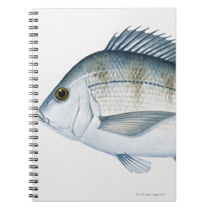 Scup Fish Notebook