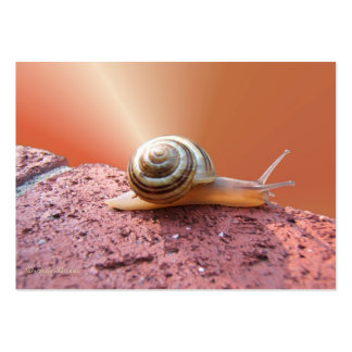 Scurrying Snail ~ ATC Pack Of Chubby Business Cards
