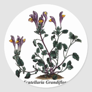 Scutellaria Grandiflora Round Sticker
