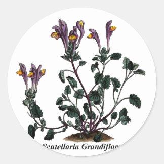 Scutellaria Grandiflora Round Stickers