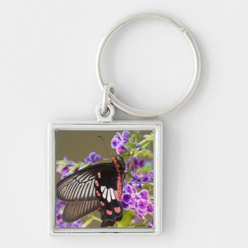 SE Asia, Thailand, Doi Inthanon, Papilio Key Chains