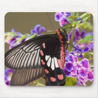 SE Asia, Thailand, Doi Inthanon, Papilio Mouse Pad